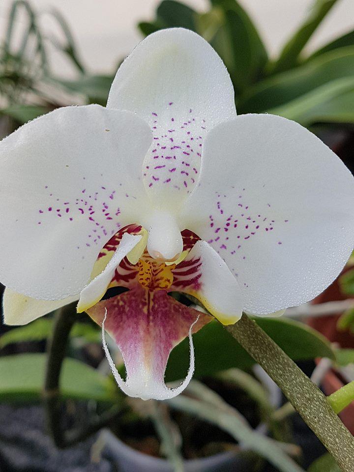 orchidée de la serre 30716610