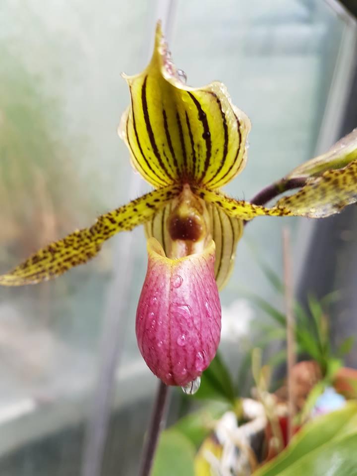 orchidée de la serre 30739811