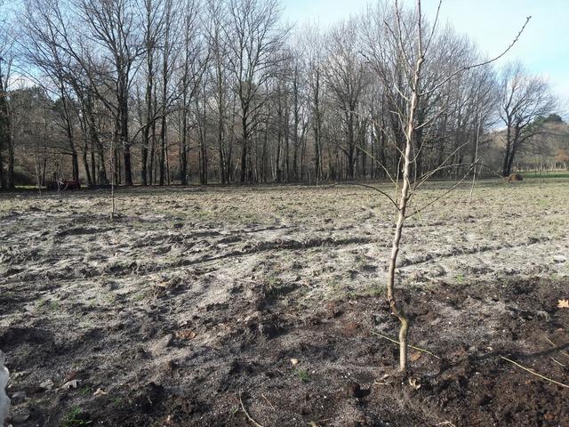 Fertilisation des pâturages 20180114