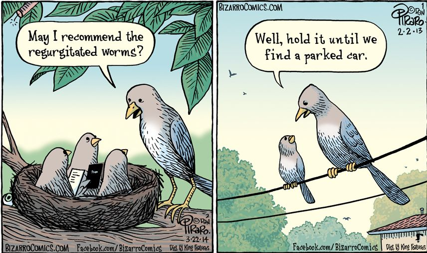 L'oiseau fait son nid Oisill10