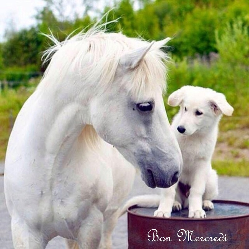 BON MERCREDI A TOUS..... Bon_me12