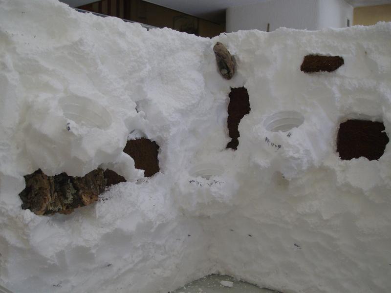 Nouveau terrarium et décor fait maison pour ma Rhino  Imgp0617