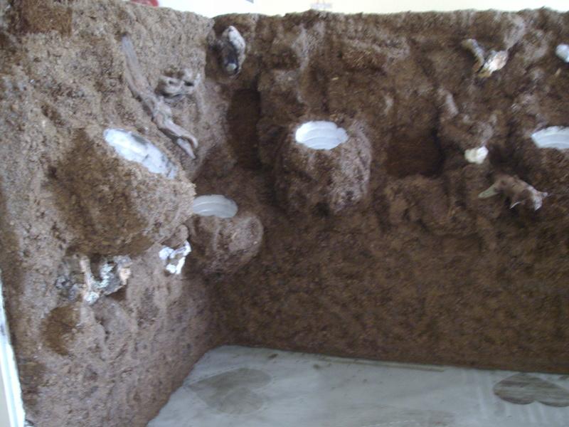 Nouveau terrarium et décor fait maison pour ma Rhino  Imgp0622