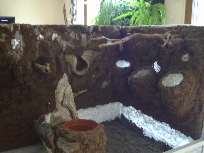 Nouveau terrarium et décor fait maison pour ma Rhino  Imgp0623