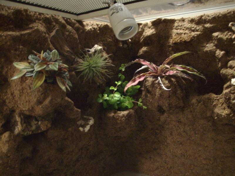 Nouveau terrarium et décor fait maison pour ma Rhino  Imgp0712