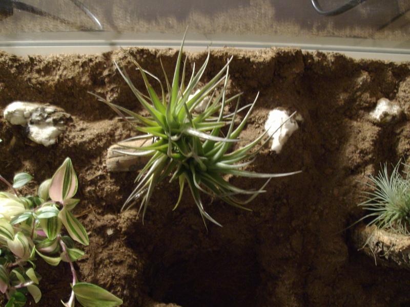 Nouveau terrarium et décor fait maison pour ma Rhino  Imgp0713