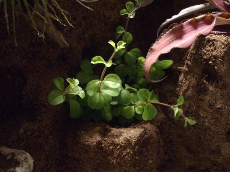 Nouveau terrarium et décor fait maison pour ma Rhino  Imgp0716