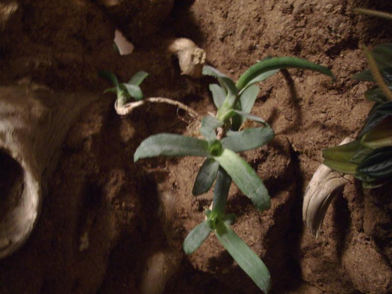 Nouveau terrarium et décor fait maison pour ma Rhino  Imgp0717