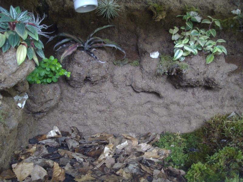 Nouveau terrarium et décor fait maison pour ma Rhino  Imgp0720