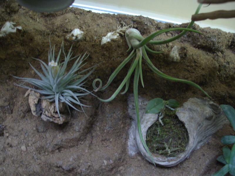 Nouveau terrarium et décor fait maison pour ma Rhino  Imgp0721