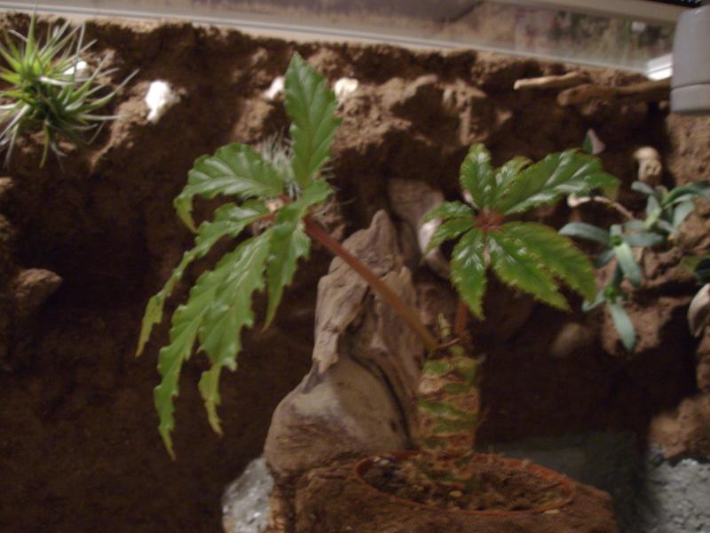 Nouveau terrarium et décor fait maison pour ma Rhino  Imgp0722