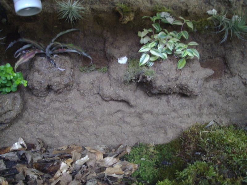 Nouveau terrarium et décor fait maison pour ma Rhino  Imgp0723