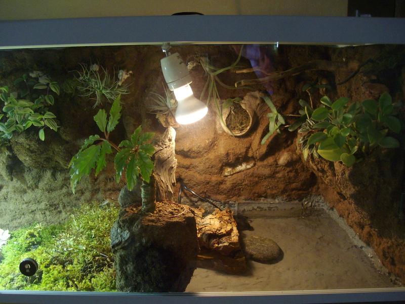 Nouveau terrarium et décor fait maison pour ma Rhino  Imgp0725