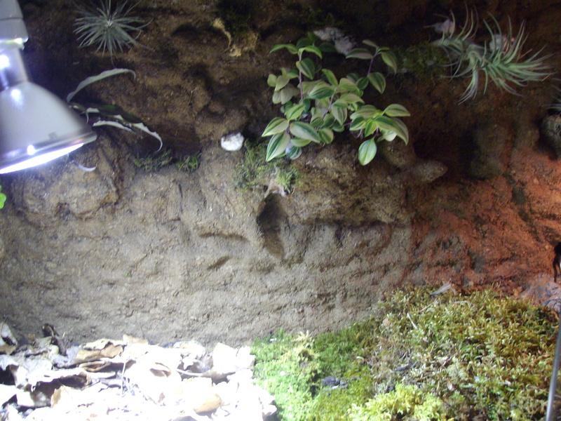 Nouveau terrarium et décor fait maison pour ma Rhino  Imgp0727