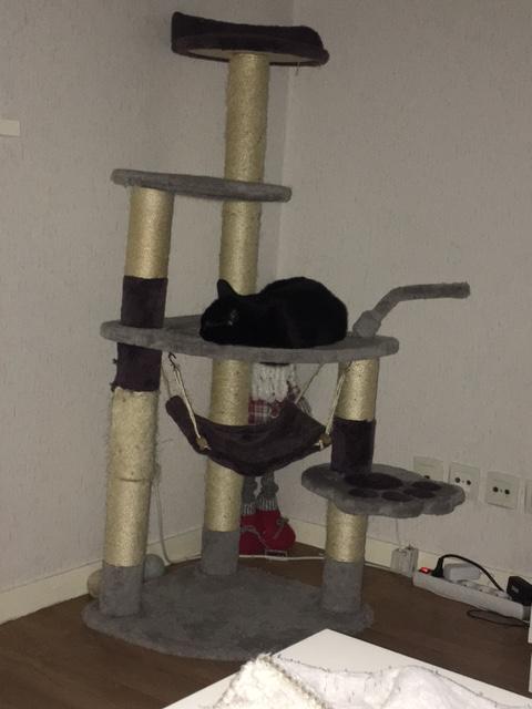 LYNN, chatte noire née en 2015 Img_3011