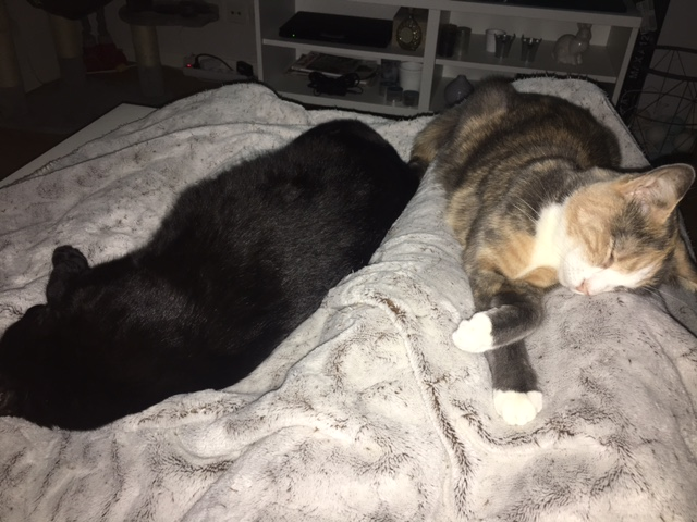 LYNN, chatte noire née en 2015 Img_3116
