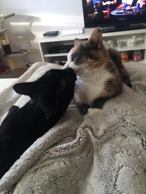 LYNN, chatte noire née en 2015 Img_3118