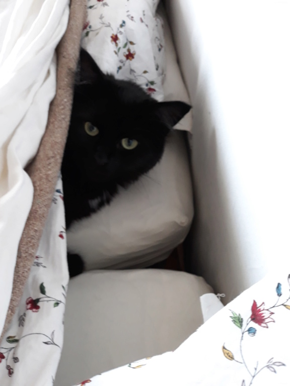 martin - MARTIN,chaton mâle noir,né le 08/06/16 20180410