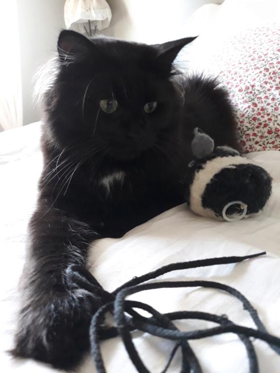martin - MARTIN,chaton mâle noir,né le 08/06/16 20180710