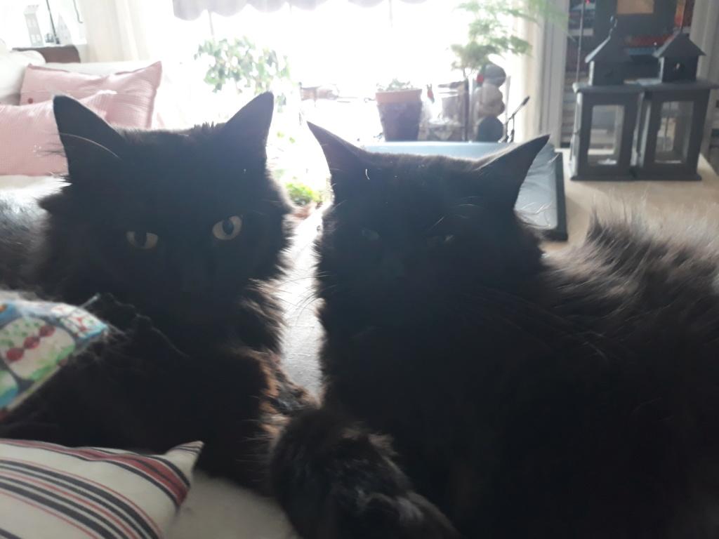 martin - MARTIN,chaton mâle noir,né le 08/06/16 20180711