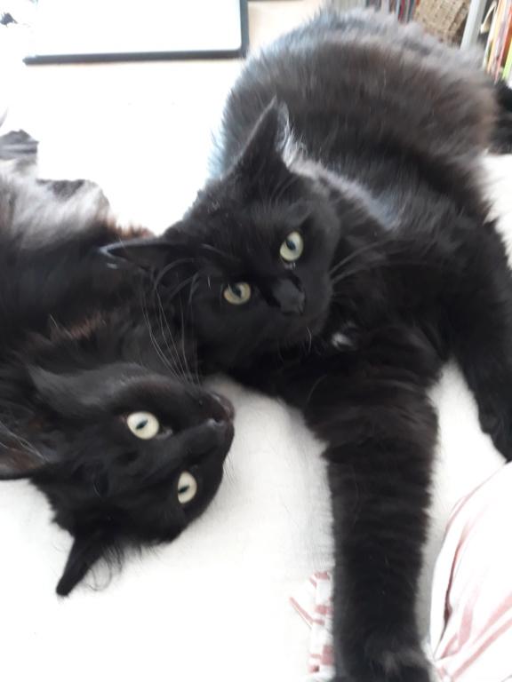 martin - MARTIN,chaton mâle noir,né le 08/06/16 20180810