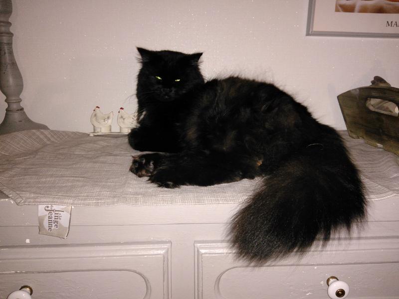 martin - MARTIN,chaton mâle noir,né le 08/06/16 Img_2016