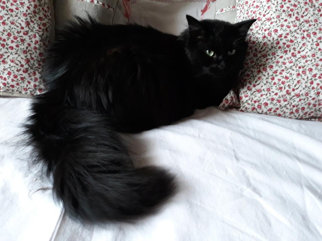 martin - MARTIN,chaton mâle noir,né le 08/06/16 Jules10