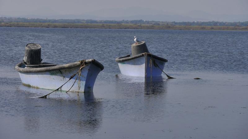 Les barques P1080211