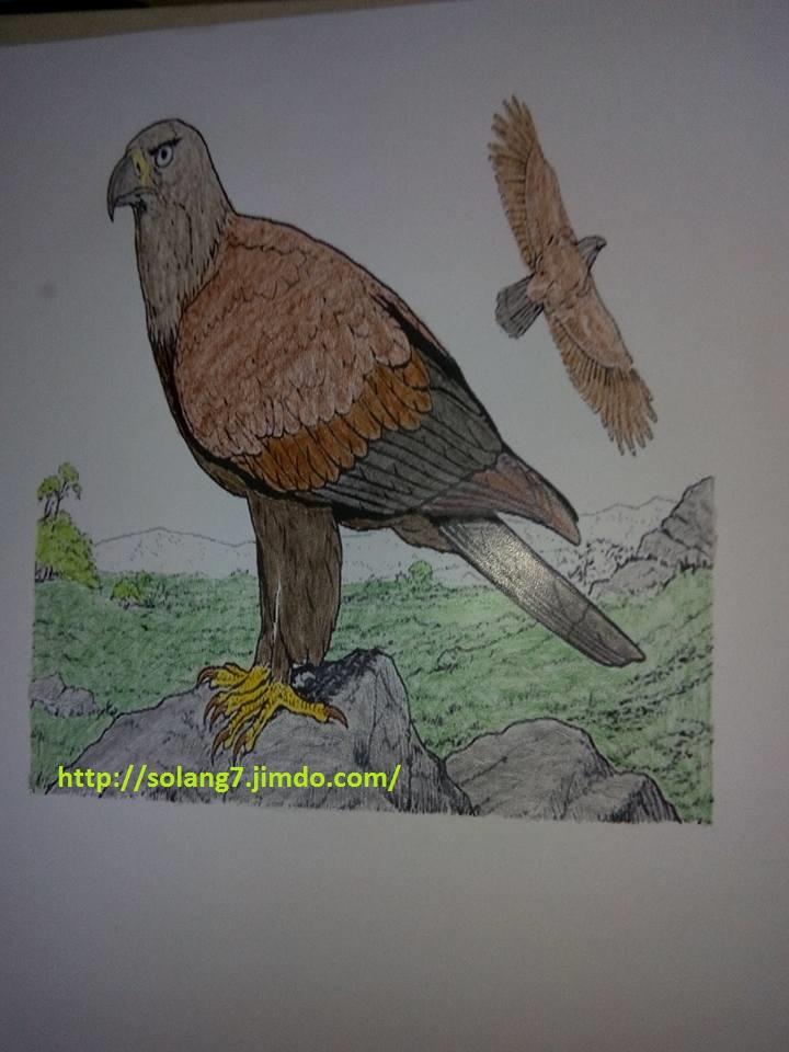 Creations de Solange : admin 14614110
