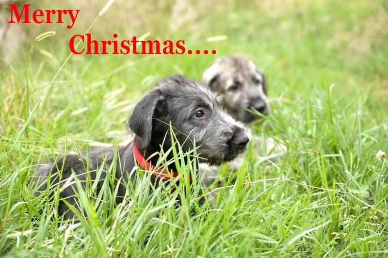 Joyeux Noël _dsc0210