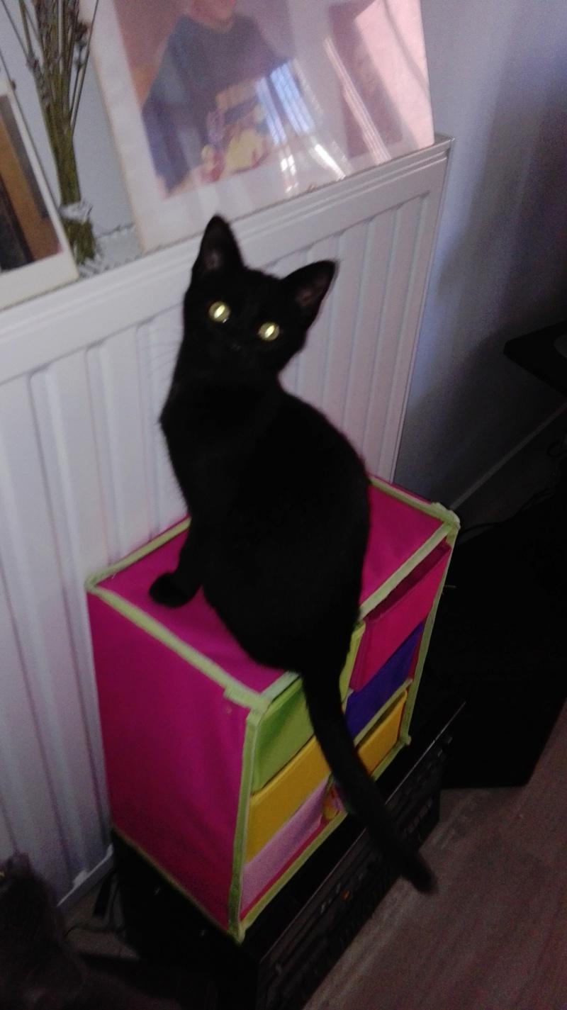 Nuty chat, mâle robe noire né le 01/07/2017, en FA longue durée Img_2026