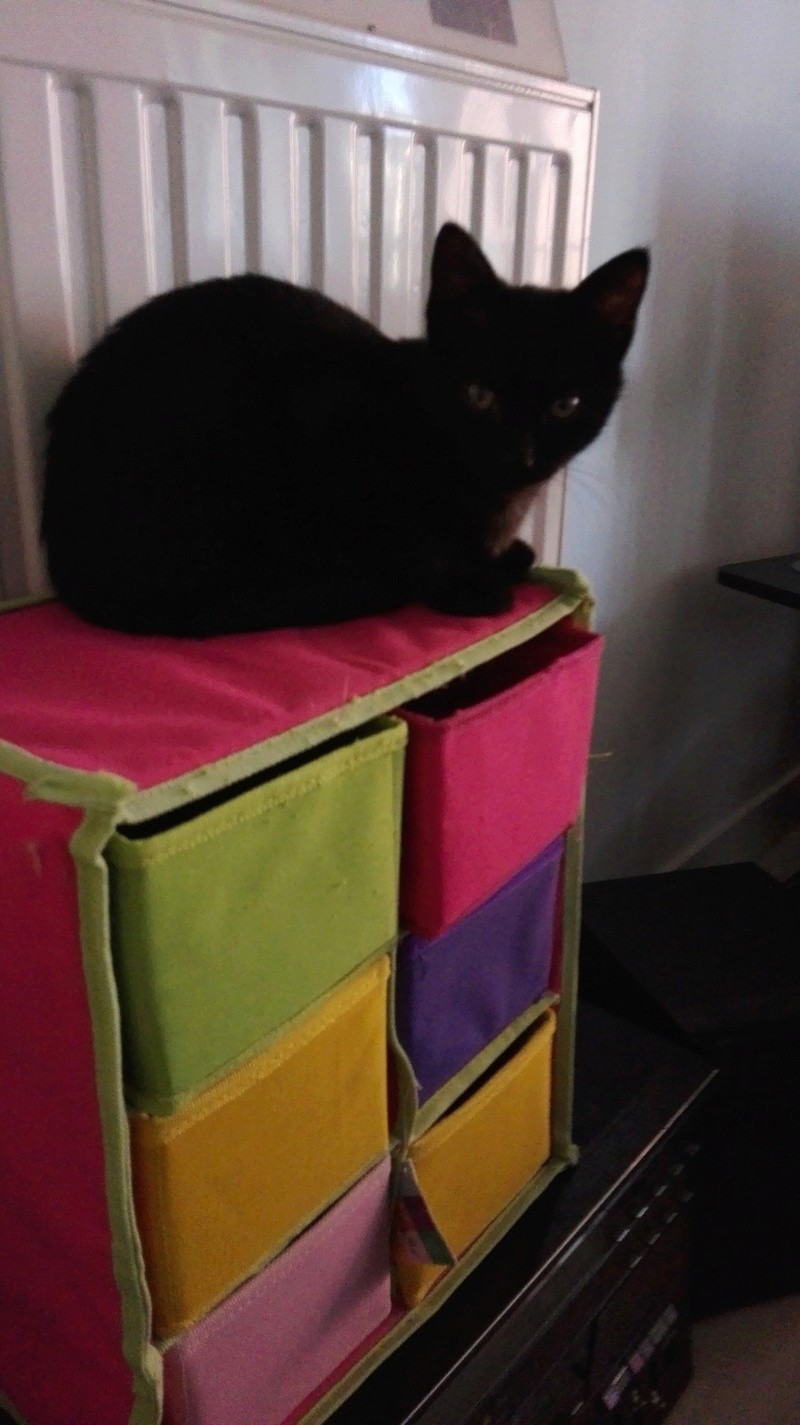 Nuty chat, mâle robe noire né le 01/07/2017, en FA longue durée Img_2027