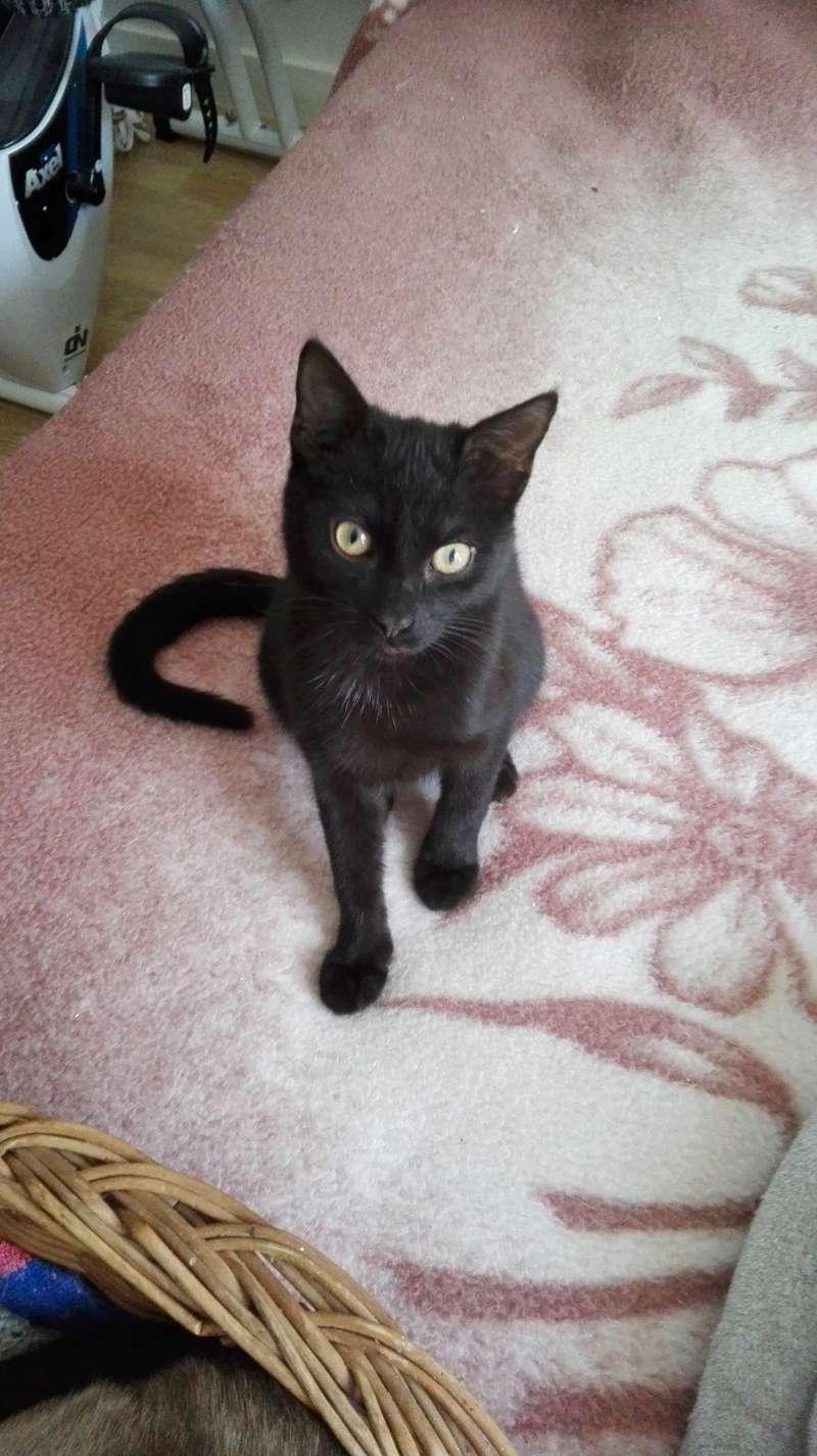 Nuty chat, mâle robe noire né le 01/07/2017, en FA longue durée Img_2046