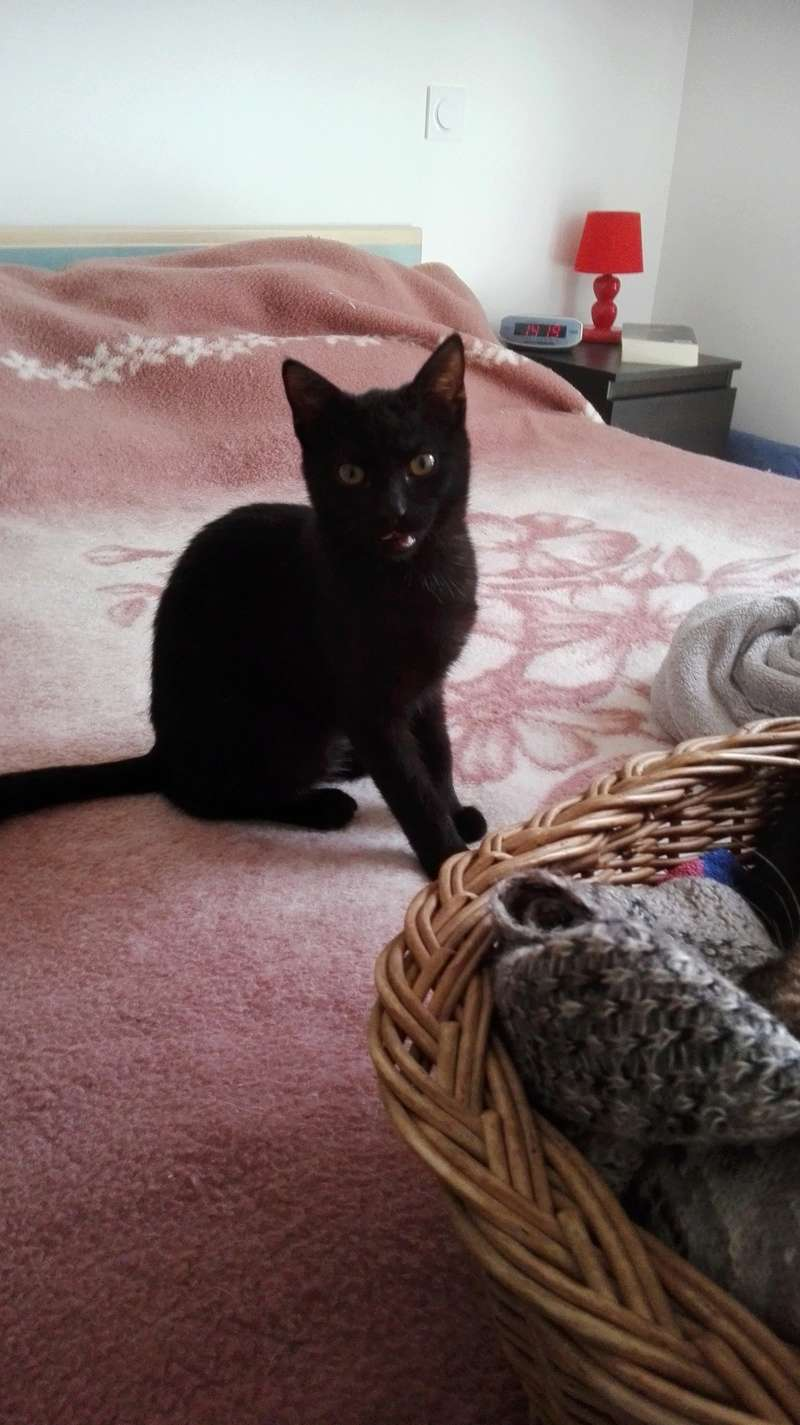 Nuty chat, mâle robe noire né le 01/07/2017, en FA longue durée Img_2081