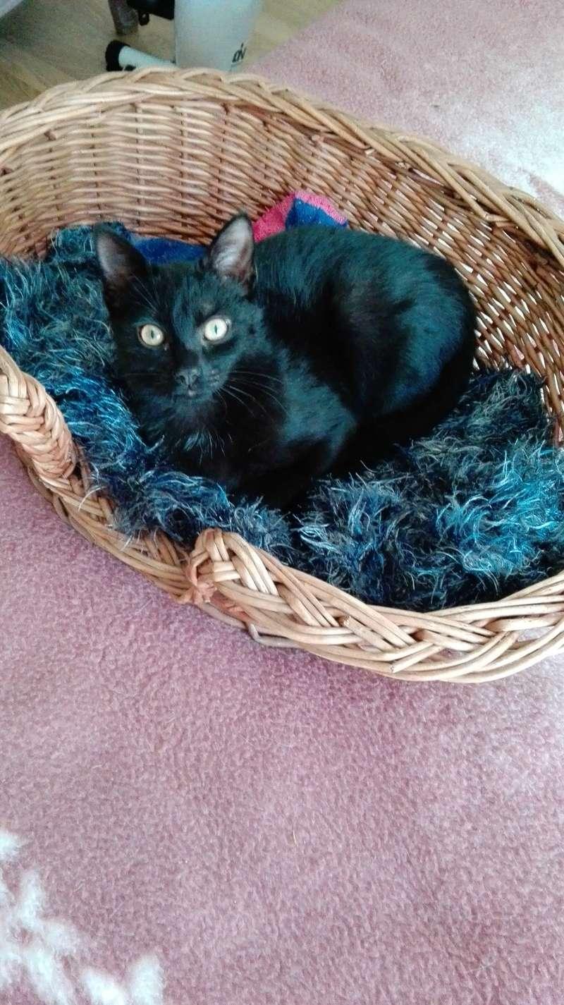 Nuty chat, mâle robe noire né le 01/07/2017, en FA longue durée Img_2082