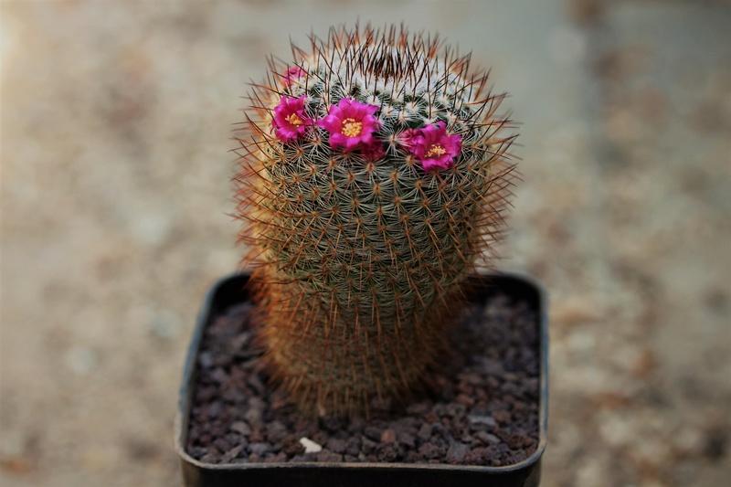 Flowers spring 2018 Img_sp10
