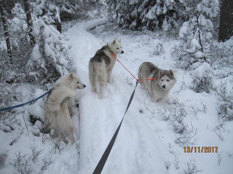 Saskia, Jiro, et leurs copains - Page 2 1011
