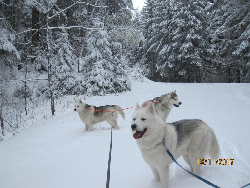 Saskia, Jiro, et leurs copains - Page 2 412