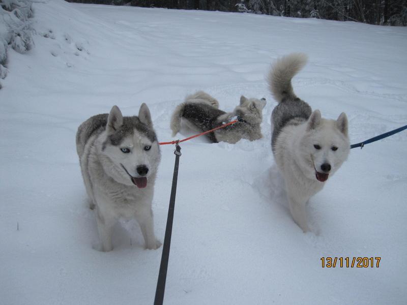 Saskia, Jiro, et leurs copains - Page 2 512