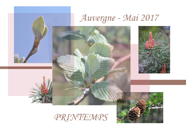 Challenge VISITEURS n° 8 - WEB Auverg11