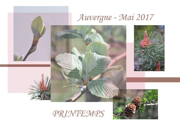 Challenge VISITEURS n° 8 - WEB Auverg13