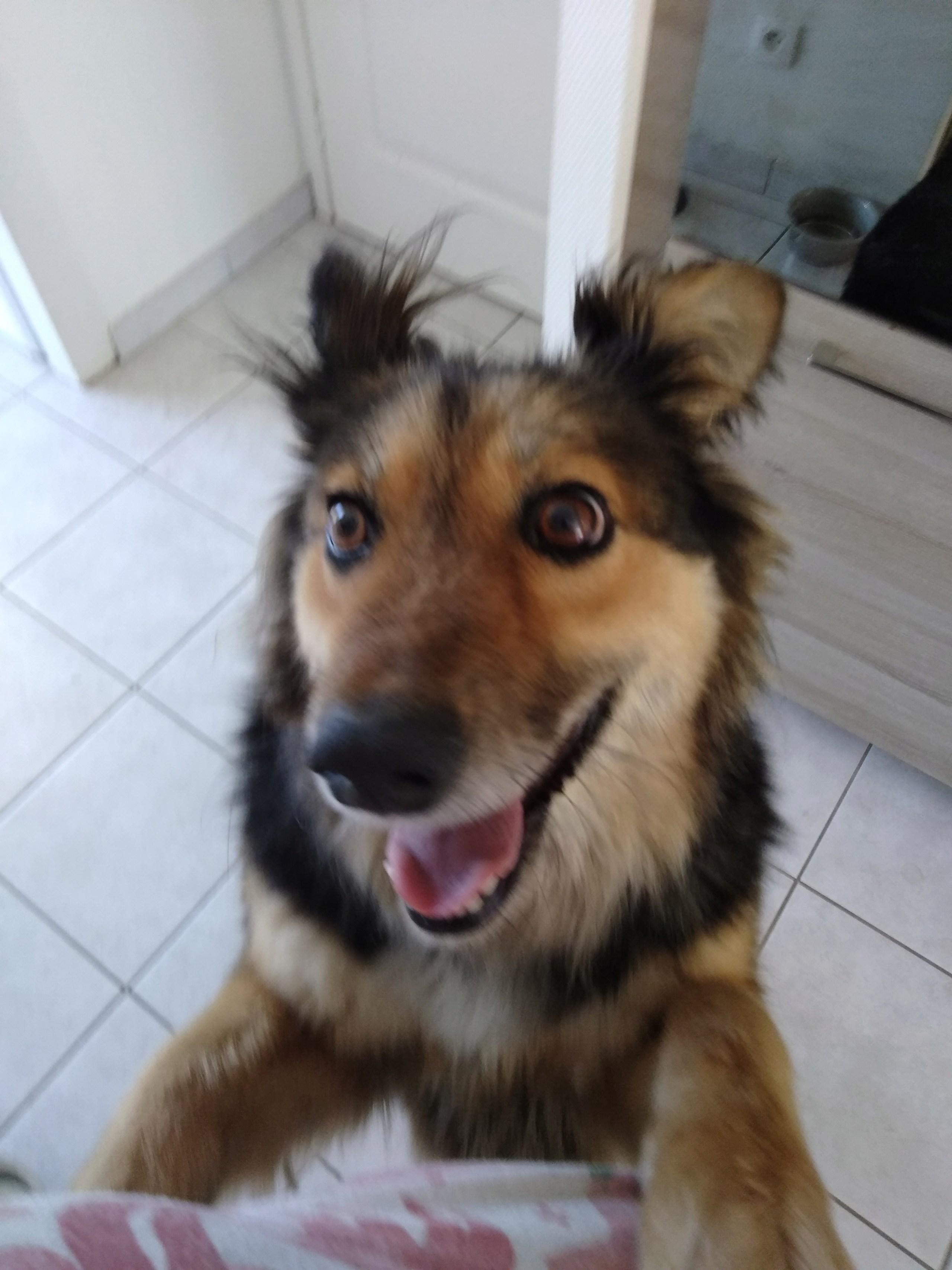 Anke - chienne femelle- refuge d'Arad - en famille d'accueil dans le 68 P_201926