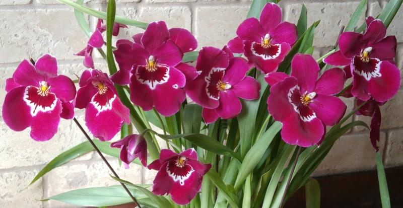 Les Orchidées chez Ola. Premiere experience  - Page 6 Image147