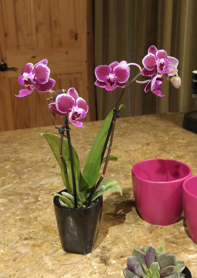 Les Orchidées chez Ola. Premiere experience  Image23