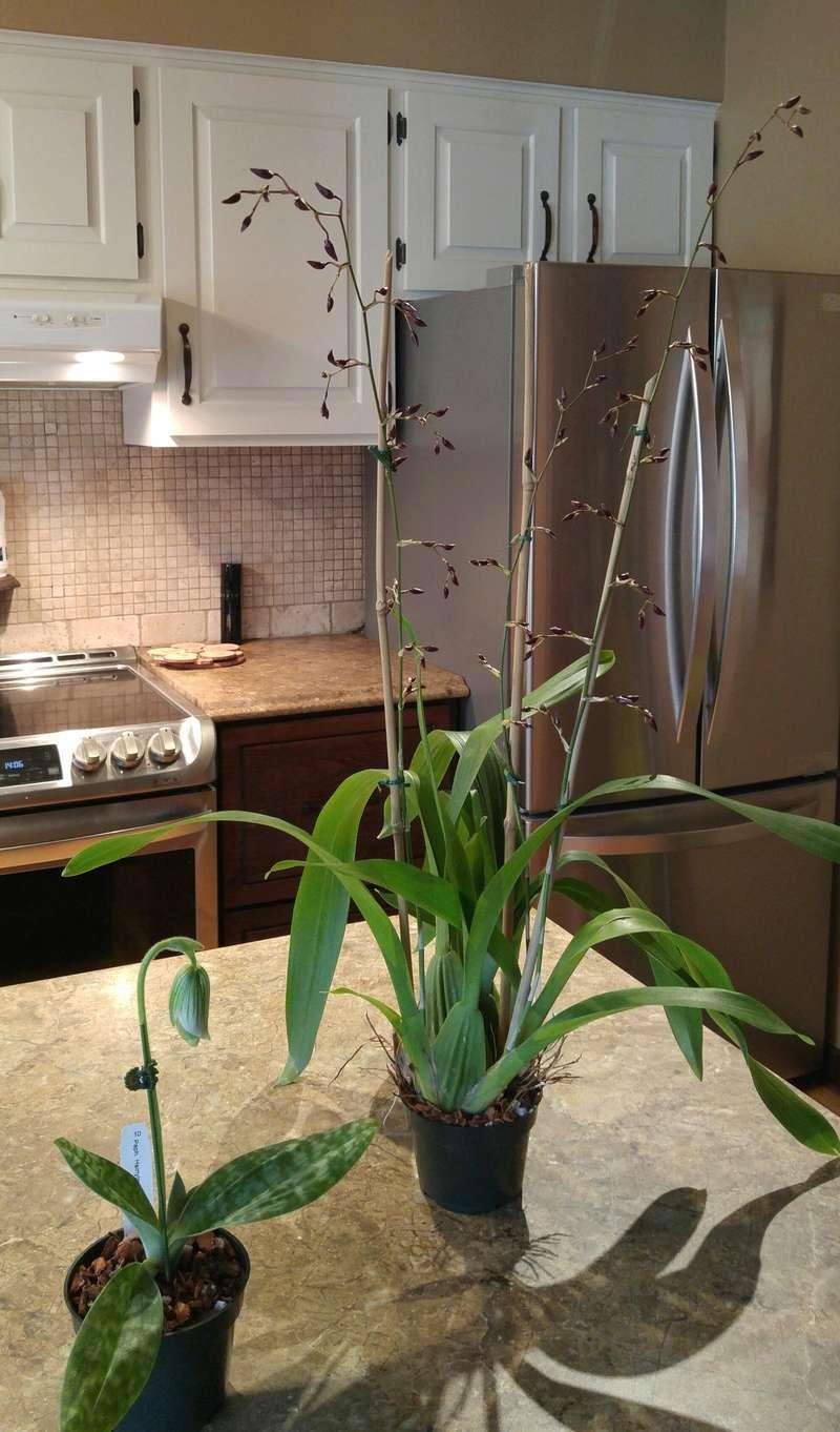 Les Orchidées chez Ola. Premiere experience  Image24