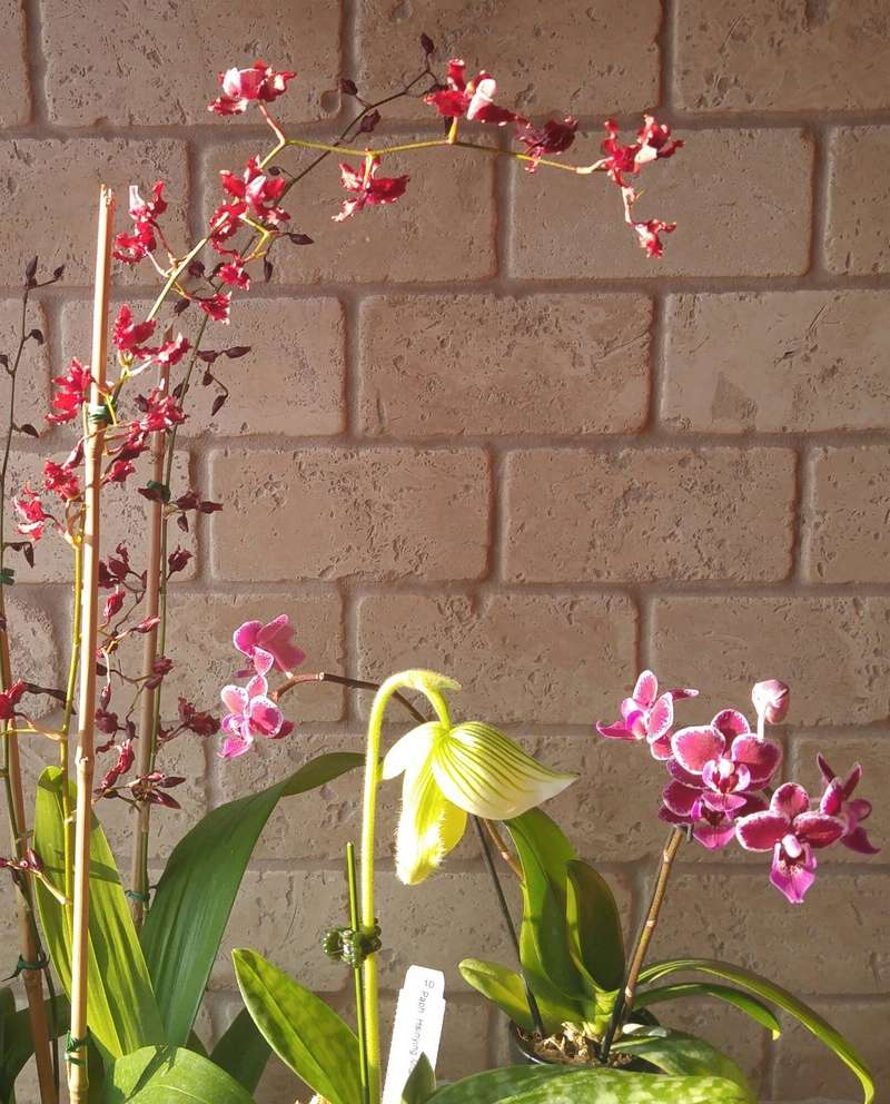 Les Orchidées chez Ola. Premiere experience  Image33