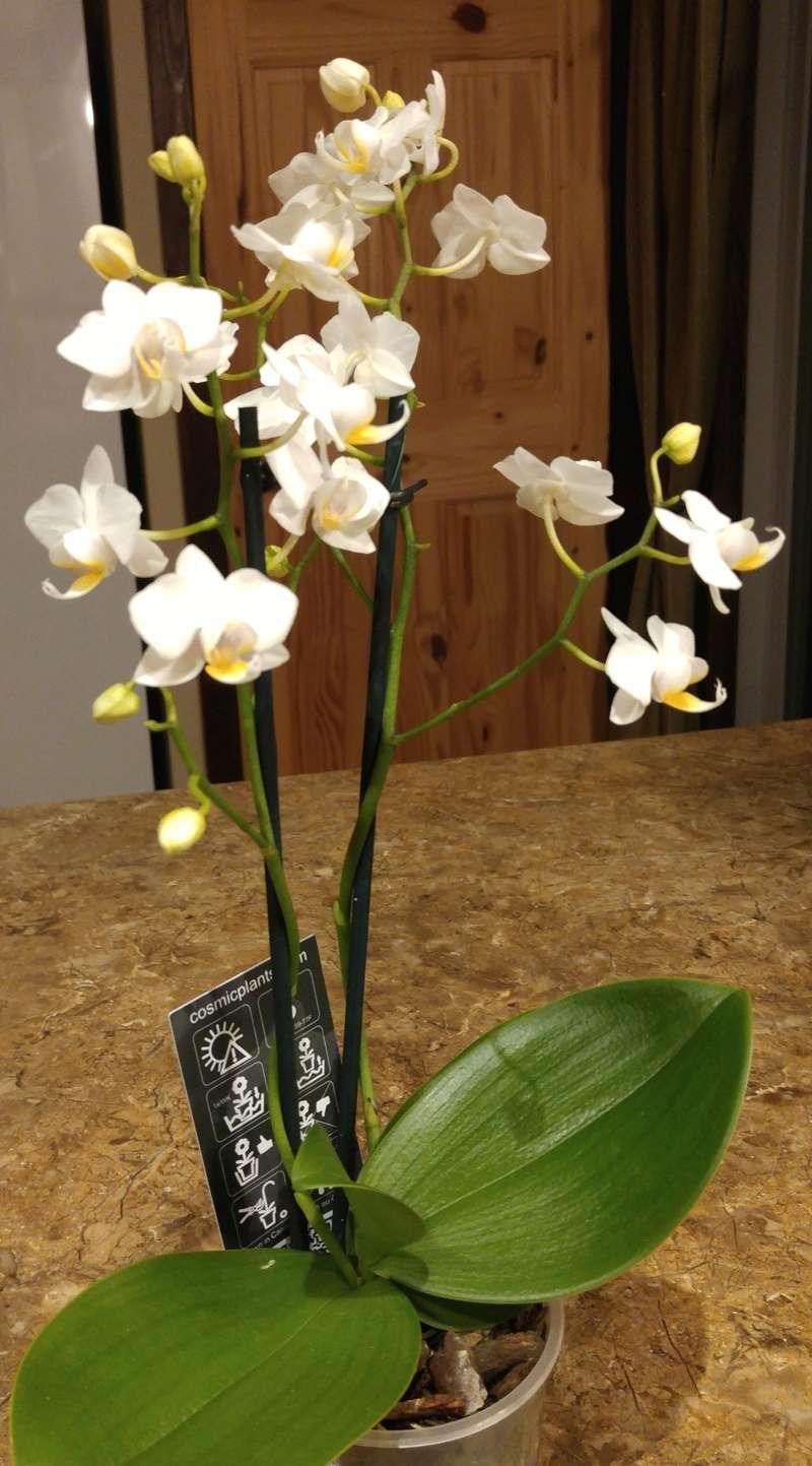 Les Orchidées chez Ola. Premiere experience  Image43