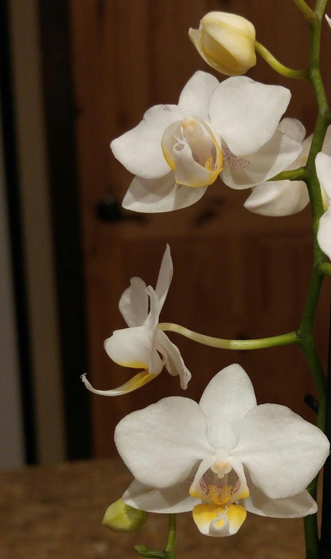 Les Orchidées chez Ola. Premiere experience  Image44