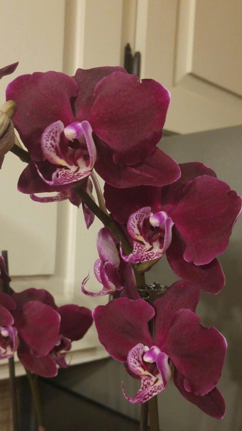 Les Orchidées chez Ola. Premiere experience  - Page 2 Image63