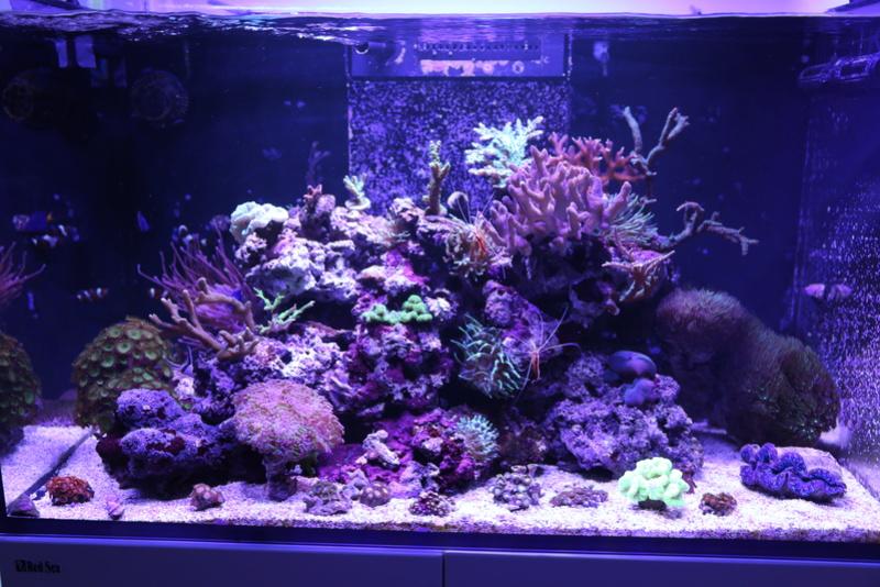 mon reefer 250 Aquari10
